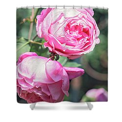 Shower Curtain featuring the photograph One Bold, One Bashful by Linda Lees