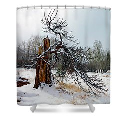 Shower Curtain featuring the photograph One Branch Left by Shane Bechler