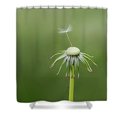 Shower Curtain featuring the photograph One Dandy by Bess Hamiti