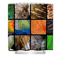 One Day At The Zoo Ll Shower Curtain