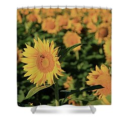 Shower Curtain featuring the photograph One In A Million Sunflowers by Chris Berry