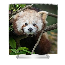 One Intense Critter Shower Curtain