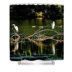 Shower Curtain featuring the photograph One Legged Egrets by Onyonet  Photo Studios