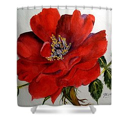 One Lone Wild Rose Shower Curtain