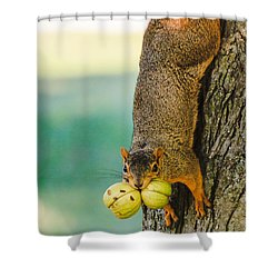 One Nut Is Never Enough Shower Curtain by Joni Eskridge
