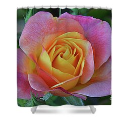 One Of Several Roses Shower Curtain by Debby Pueschel