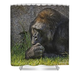 Shower Curtain featuring the photograph One Of These Days Alice by Mitch Shindelbower