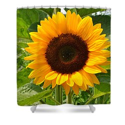 One Sunflower Shower Curtain by Diane Lent