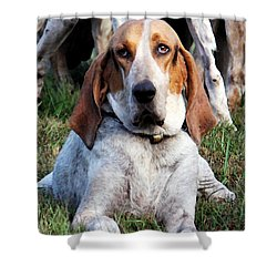 Shower Curtain featuring the photograph One Tired Hound by Polly Peacock