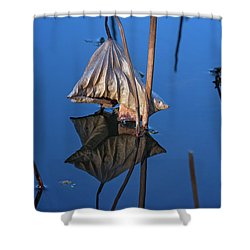 Shower Curtain featuring the photograph Only In Still Water by Linda Lees