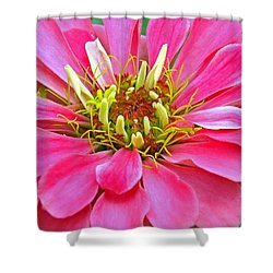 Only The Beginning Shower Curtain
