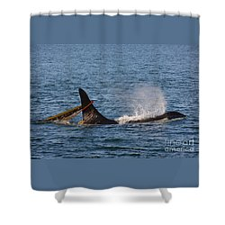 Onyx L87 Shower Curtain