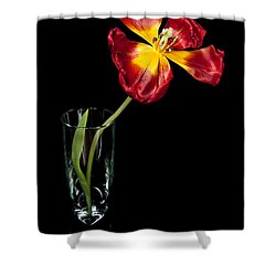 Open Red Tulip In Vase Shower Curtain