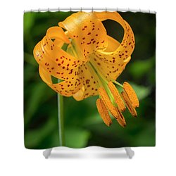 Shower Curtain featuring the photograph Open Tiger Lily by Jean Noren