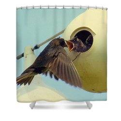 Open Wide Shower Curtain by Karen Wiles