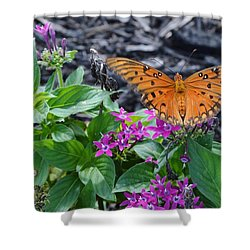 Open Wings Of The Gulf Fritillary Butterfly Shower Curtain