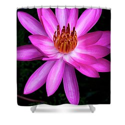 Opening - Early Morning Bloom Shower Curtain by Kerryn Madsen-Pietsch
