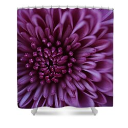 Shower Curtain featuring the photograph Purple Mum by Glenn Gordon
