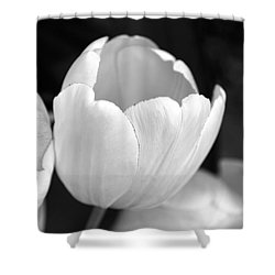 Opening Tulip Flower Black And White Shower Curtain