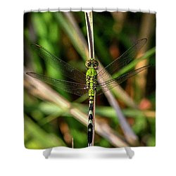 Shower Curtain featuring the photograph Openminded Green Dragonfly Art by Reid Callaway