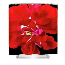 Openredrose Shower Curtain by Susan Crossman Buscho