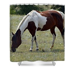 Opposites In Harmony Shower Curtain by Ken Smith