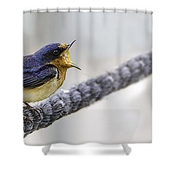 Shower Curtain featuring the photograph Oprah In The Marsh by Steven Santamour