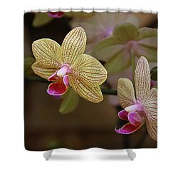Opulent Orchids Shower Curtain