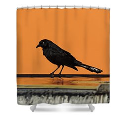 Orange And Black Bird Shower Curtain