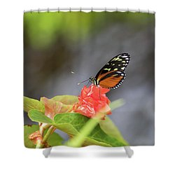 Orange And Black Butterfly Shower Curtain