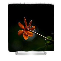 Orange And Black Shower Curtain