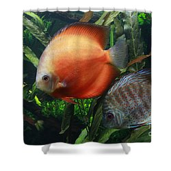 Orange And Blue Speckled Discus Shower Curtain