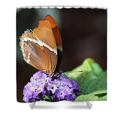 Orange And Brown Butterfly On Purple Shower Curtain