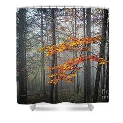 Shower Curtain featuring the photograph Orange And Grey by Elena Elisseeva