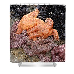Orange And Purple Starfish Shower Curtain