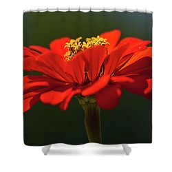 Shower Curtain featuring the photograph Orange Aster-a Bee's Eye View by Onyonet  Photo Studios