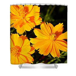Shower Curtain featuring the photograph Cosmos Trio by Sheila Brown