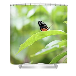 Shower Curtain featuring the photograph Orange Black Butterfly by Raphael Lopez