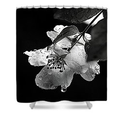 Orange Blossom Shower Curtain by Elaine Hunter