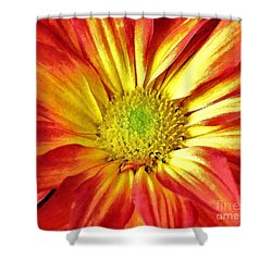 Shower Curtain featuring the photograph Orange Burst by Allen Beatty