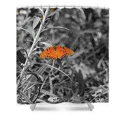 Orange Butterfly In Black And White Background Shower Curtain
