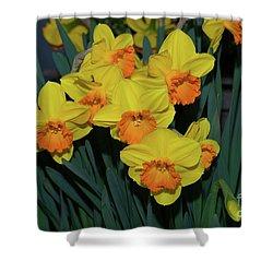 Orange-centered Daffodils Shower Curtain
