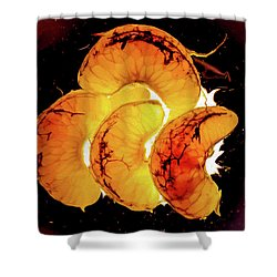 Orange Choc Shower Curtain