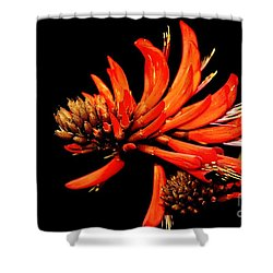 Shower Curtain featuring the photograph Orange Clover II by Stephen Mitchell
