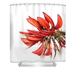 Shower Curtain featuring the photograph Orange Clover IIi by Stephen Mitchell