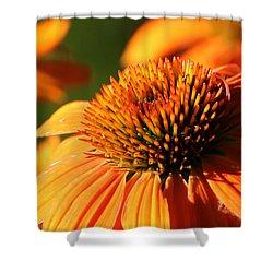 Orange Coneflower At First Light Shower Curtain