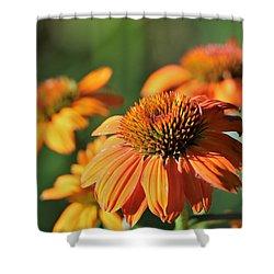 Orange Cone Flowers In Morning Light Shower Curtain