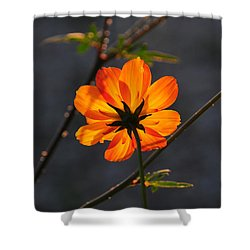 Shower Curtain featuring the photograph Orange Cosmo by Susie Rieple