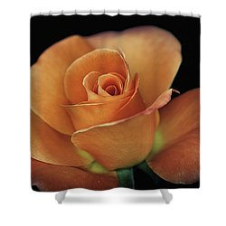 Orange Cream Shower Curtain by Elaine Malott