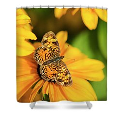 Shower Curtain featuring the photograph Orange Crescent Butterfly by Christina Rollo